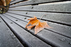 Frosty Leaf on Park Bench in Snowy London. Frosty Leaf and Park Bench in London's Regents Park Royalty Free Stock Photography