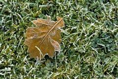 Frosty Leaf sur l'herbe Photographie stock libre de droits