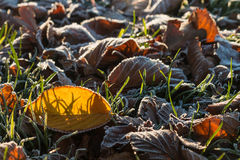 Frosty leaves and grass Royalty Free Stock Images