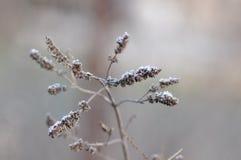Frosty Leaves van Munt royalty-vrije stock afbeeldingen