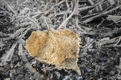 frosty liści, Fotografia Stock
