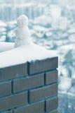 Frosty. Stock Image