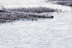 Frosty Log On Frozen Pond lizenzfreie stockfotografie