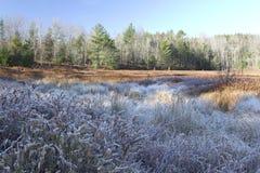 Frosty marsh area Stock Photography