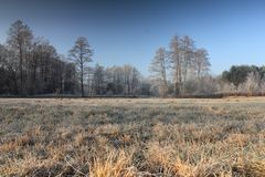 Frosty meadow Stock Images
