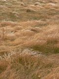 Frosty Meadow. Grasses. Fish Creek Park, Calgary, Alberta, Canada Stock Photography