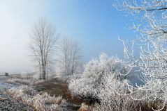 Frosty, misty morning Stock Photography