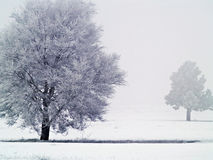 Frosty, Misty Trees 1 Stock Photography