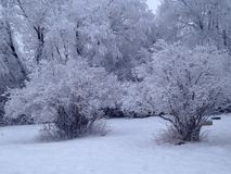 Frosty mornin. My daughter back yard Stock Photography