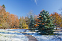 Frosty morning. In the sunny autumn park Royalty Free Stock Photos