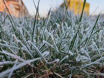 Frosty Morning fotografia stock libera da diritti