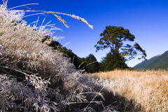 Frosty morning. Cold morning with scenic frost covered grass Royalty Free Stock Photography