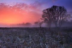 Frosty Morning Stock Image