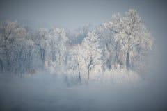 Frosty morning Stock Photo