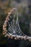 Frosty morning. Cobweb sealed in ice on a frosty morning, Westland, New Zealand Stock Photos