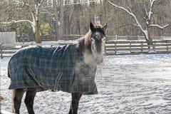 Frosty Morning Royalty-vrije Stock Afbeelding