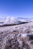 Frosty Morning Royalty Free Stock Photography