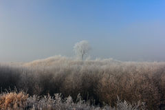 Frosty morning background Stock Images