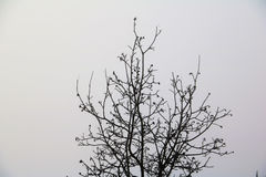 Frosty morning. Frosty and cold but a fresh new morning royalty free stock images