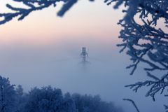 Frosty morning. Cold frosty foggy morning in the wood stock photography