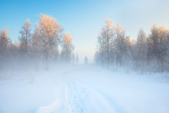 Frosty morning. Cold winter, fog Stock Photo