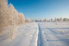 Frosty morning. Cold winter, fog Stock Image