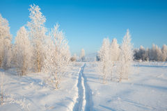 Frosty morning. Cold winter, fog Royalty Free Stock Image