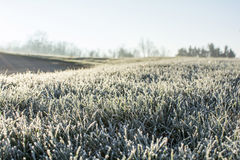 Frosty morning in early December. A cold frost on the grass and cover all over the ground in early December morning Stock Image