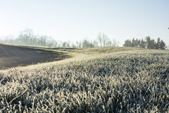 Frosty morning in early December. A cold frost on the grass and cover all over the ground in early December morning Stock Images