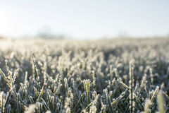Frosty morning in early December. A cold frost on the grass and cover all over the ground with small bokeh in early December morning Stock Photography