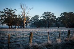 Frosty morning. Frosty field early morning with fence in the foreground Stock Photos