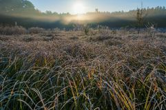 Frosty morning field. Autumn landscape stock photos
