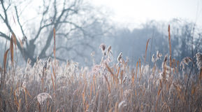 Frosty morning in the forest Royalty Free Stock Photo