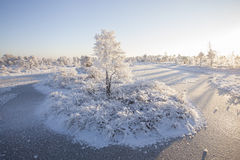 Frosty morning at forest. Landscape with the frozen plants, trees and water. Stock Images