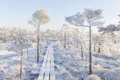 Frosty morning at forest. Landscape with the frozen plants, trees and water. Stock Image