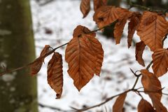 Frosty morning in the forest. The leaves are covered with frost stock photography