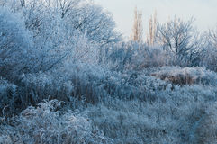 Frosty morning. Morning frost, frosty winter morning in the predawn Royalty Free Stock Image
