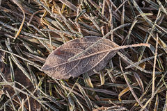 Frosty morning. Frozen leaves and grass. Royalty Free Stock Photography