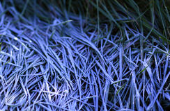 Frosty morning grass Royalty Free Stock Photography
