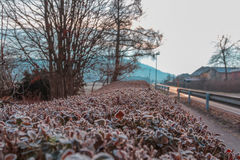 Frosty morning. Royalty Free Stock Images