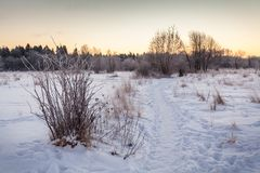 Frosty morning. Royalty Free Stock Image