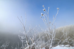 Frosty Morning on the lake, fog and frost on the grass. Royalty Free Stock Photo
