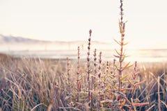 Frosty morning landscape Stock Photo
