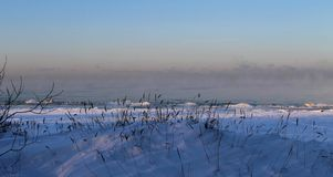 Frosty morning near the Baltic sea. In Tallin, with snow? fog and some plants royalty free stock photos