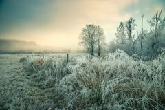 Hoar frost and snowy landscape. Frosty morning near Jonsvatnet lake, Trondheim area in Norway. Hoar forst and snow. Frozen trees and grass. Morning time royalty free stock image