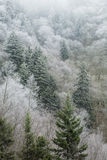 Frosty Morning on Newfound Gap Road, Great Smoky Mountains Natio Royalty Free Stock Images