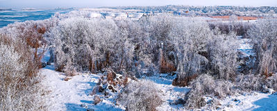 Frosty morning Royalty Free Stock Image