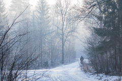 Frosty morning. A person walking through the forest in frosty cold winter morning stock photos
