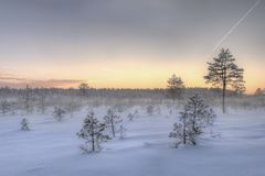 Frosty morning in raised bog. Landscape with the frozen plants. Latvia. Frosty morning in raised bog. Boardwalk in raised bog. Landscape with the frozen plants royalty free stock photo