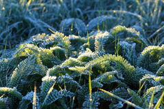 Frosty morning in Siberia Royalty Free Stock Image
